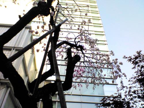 桜ともみじ.jpg
